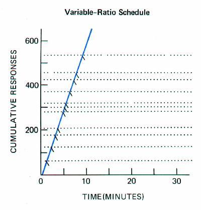 schedules of reinforcement skinner. schedule of reinforcement