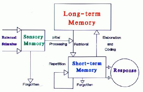 long term memory and critical thinking The effects of sleep deprivation on memory, problem solving, and critical thinking 2 abstract the main focus of this research was to obtain a deeper insight of the.